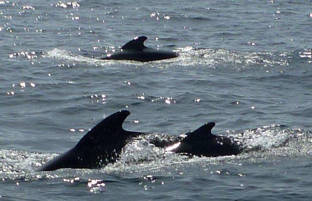 1352123667_dolphins_2.jpg