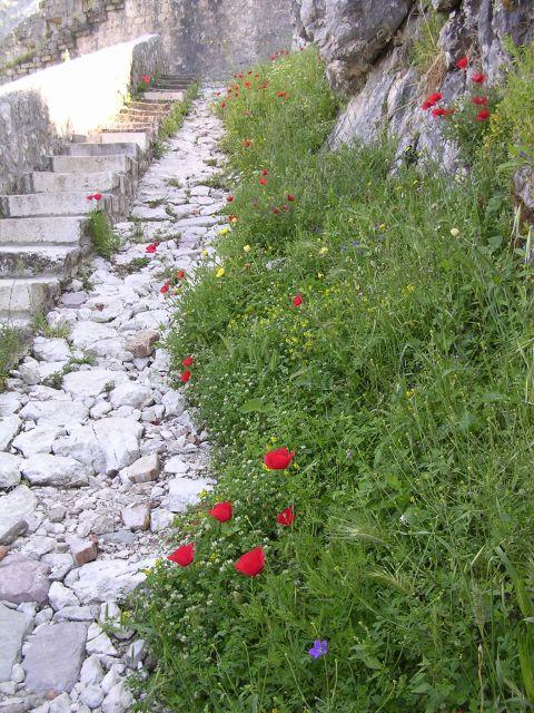 1372783356_climbing_the_steps_at_kotor.jpg
